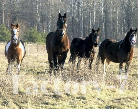 Pferde.det-bearbeitet_1200x800x72dpi